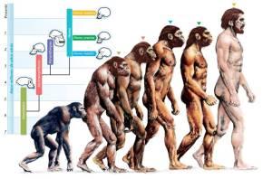 انسان کے آبائو اجداد نے 85 ملین سال قبل دوسرے ممالیہ جانوروں سے مختلف شکل اختیار کی تھی